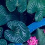 Satt grüne Pflanzenblätter mit pink weißen Blüten